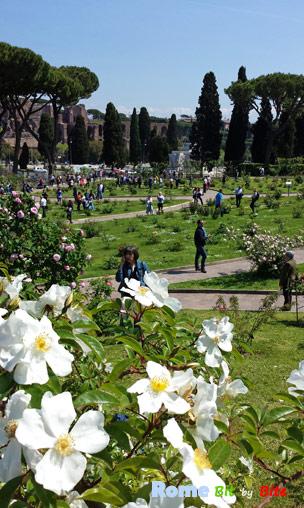 comunal-rose-garden