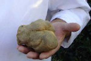 White truffle record