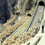 sheep-flock-crossing-san-boldo-pass-tmb