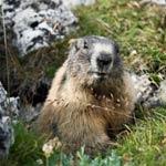 groundhog-thumbnail