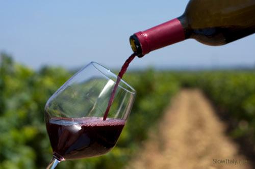 Organic Italian wine