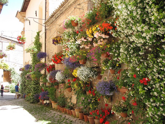 Flowered streets of Spello