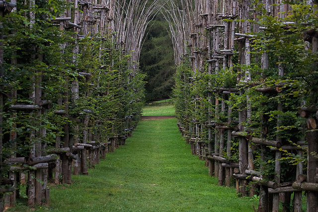 Living tree cathedral