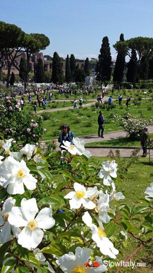 municipal-rose-garden-b