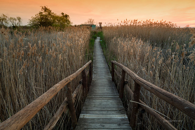 Footbridge in the marshlands of Lake Massaciuccoli