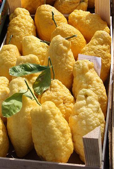 Citrons (Citrus Medica), 'cedri' in Italian.