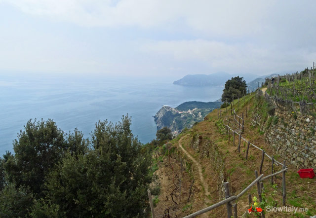 Hiking trail between Volastra and Corniglia, which leads you through the vineyards, offering stunning views over the coast line. Photo Slow Italy.