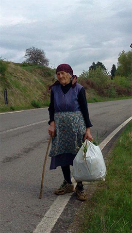 "Sweet old lady collecting ""cicoria selvatica"" (Cichorium inthybus - wild chicory) in the Umbrian countryside. See: The Green Hills of Umbria"