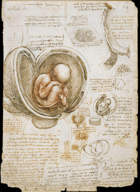 Leonardo-da-Vinci-studies-of-the-foetus-in-the-womb-c