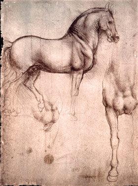Study of horse from Da Vinci's notebooks